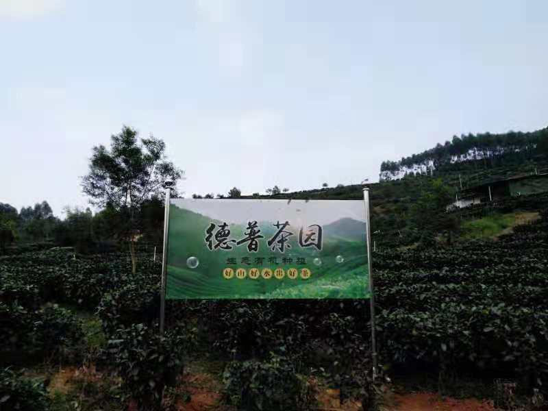 潮州茶叶厂家加盟合作