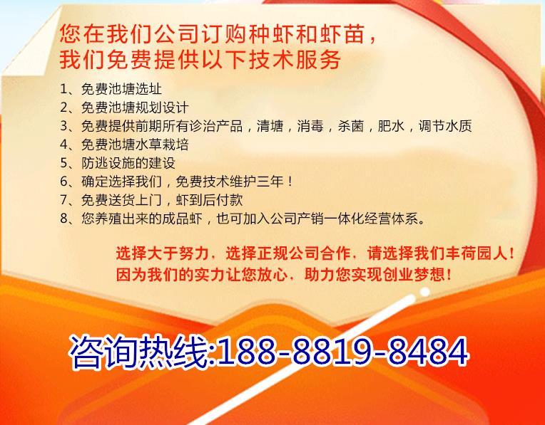 ?北京龙虾养殖需要多少钱