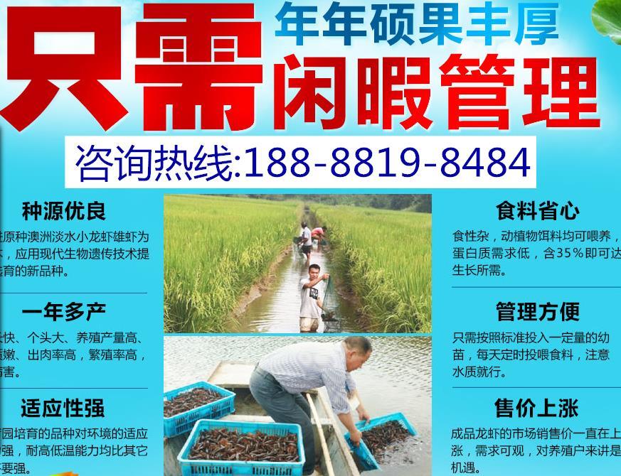 ?南京农村养殖什么赚钱