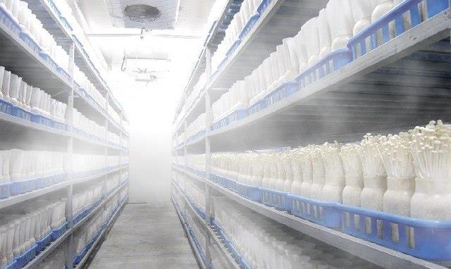 廊坊养猪场食品厂消毒设备定做养殖场防疫消毒专用设备米孚食品厂大板山丹图片