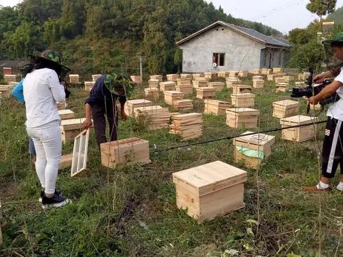 遵義蜜蜂養殖電話 桐梓蜜蜂養殖基地