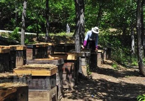 鳳岡蜜蜂養殖基地 正安蜜蜂養殖公司
