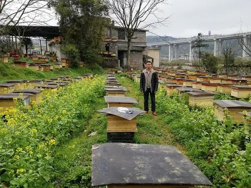 綏陽中蜂養殖 匯川附近哪里有中蜂養殖 余慶中蜂養殖技術