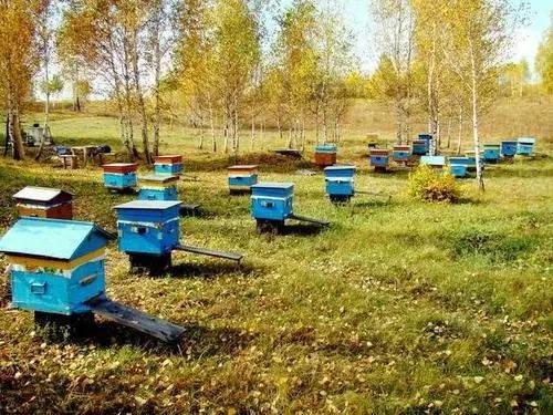 余慶種蜂養殖供應商 附近的種蜂養殖