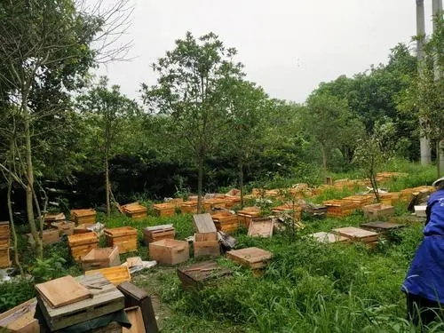 湄潭種蜂養殖批發價 綏陽哪里有種蜂養殖
