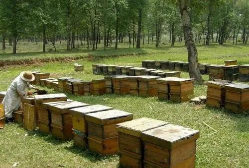 養蜜蜂屬于什么行業屬于畜牧業嗎